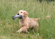 pup with bird
